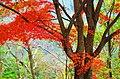 高城山 Takagi-yama 2013.11.17 - panoramio.jpg