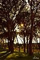 -κρυμένος ήλιος- στο Δάσος Στροφυλιάς.jpg