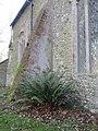 -2020-01-04 Fern growing in churchyard of All Saints church, Gimingham.JPG
