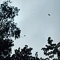 -bird -flying -through -trees (21172527161).jpg
