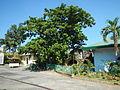 05924jfMonasterio Santa Clara Tuyo Balanga City Bataanfvf 11.JPG