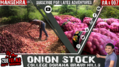 07 Onion Stock Zeetelas.png