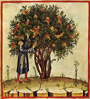 Tacuinum Sanitatis - Tacuinum Sanitatis, Lombardy, late 14th century (Biblioteca Casanatense, Rome).