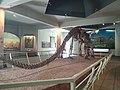 160-million-year-old mounted dinosaur skeleton.jpg
