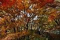 171125 Kobe Municipal Forest Botanical Garden09s3.jpg