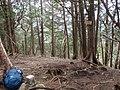 2010-04-11 ウトウの頭 - Utou-no-atama - panoramio.jpg
