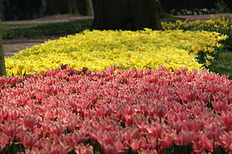 Groot-Bijgaarden Castle - Flower exhibition at Groot-Bijgaarden Castle