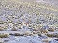 20120618 Chile 3384 Tatio (7704034922).jpg