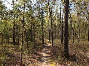 Batona Trail - Typical section of the Batona Trail in Brendan T. Byrne State Forest