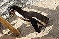 2015-05-24 Vogelpark Marlow 10.jpg