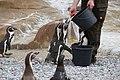 2015-05-24 Vogelpark Marlow 16.jpg
