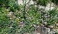 2015-05-27 Paris, Jardin des plantes 12.jpg