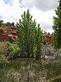 2016.05.28 13.07.09 DSC04508 - Flickr - andrey zharkikh.jpg