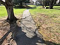 2018-04-11 16 14 06 An asphalt walking path buckled and cracked due to the roots of a Red Maple in the Franklin Glen section of Chantilly, Fairfax County, Virginia.jpg