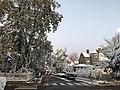 2020 snow Acacia St Cambridge Massachusetts.jpg