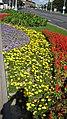 20 25 36 - Street Gardens of Minsk, Belarus 2009 (3875921417).jpg