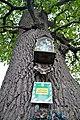 46-215-5014 Piddnistriany Oak RB 18.jpg