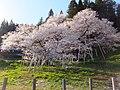 5 Chome Ishiuramachi, Takayama-shi, Gifu-ken 506-0825, Japan - panoramio (1).jpg
