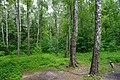 80-364-5001 Kyiv Birch Grove SAM 9868.jpg