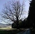 95698 Neualbenreuth, Germany - panoramio (10).jpg