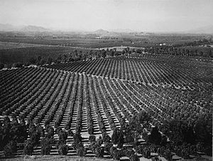 Inland Empire - Arlington Heights Citrus Groves, Riverside circa 1903