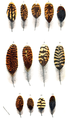 A Hand-book to the Game-Birds - Feathers of Scotch Grouse Plate 3.png