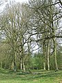 A Woodland Walk, near Hartsgreen, Shropshire - geograph.org.uk - 401359.jpg