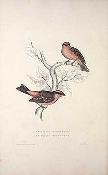 A century of birds from the Himalaya Mountains (TAB. XXXI) (9237239781).jpg