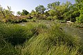 A variety of plants line the bank of Spring Creek. (24486005843).jpg