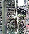 Abandoned Building (8) (12488503863).jpg