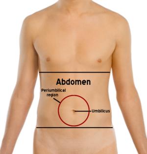 Abdomen-periumbilical region.png
