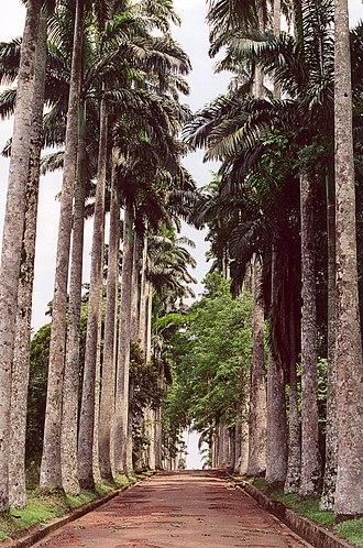 Aburi - Aburi Botanical Gardens and Palm Trees in Aburi