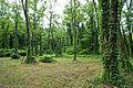 Acacia kannabe02s5.jpg