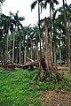 Acharya Jagadish Chandra Bose Indian Botanic Garden - Howrah 2011-02-20 1595.JPG