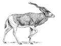 Addax (PSF)R.png