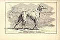 Afghan Greyhound BDL.jpg