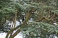 African Fish Eagle (7513890306).jpg