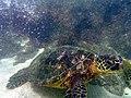 Aki Beach resident - panoramio.jpg
