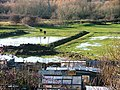 Allotments and Paddock, Billingham Bottoms - geograph.org.uk - 292418.jpg