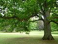 Alter Baumbestand im Gräflichen Park Bad Driburg.jpg