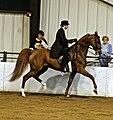 American Saddlebred2.jpg