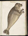 Animal drawings collected by Felix Platter, p1 - (32).jpg