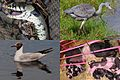 Animals that we met at 24 July 2015 on our way to Amsterdam, Houten and Wageningen - panoramio.jpg