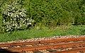Apple blossoms and railway tracks 2.jpg
