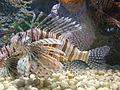 Aquarium-Dalian-China7863.JPG