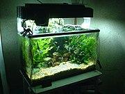 An 80 litre home aquarium.