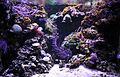 Aquarium Coral reef.jpg