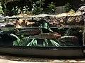 Arapaima gigas in aqua park.jpg