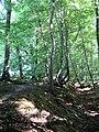Ashreed Wood - geograph.org.uk - 1427238.jpg