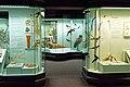 Augsburg Naturmuseum 23.jpg